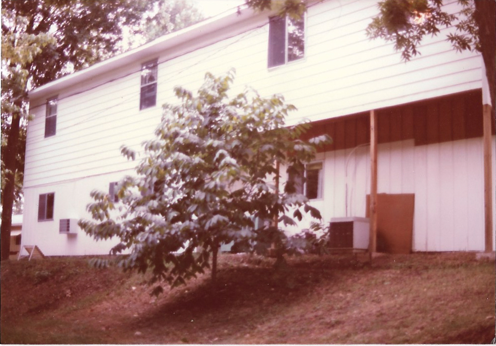 Pappaw tree behind the main building in 1983